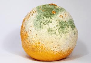 Mold growth on an orange
