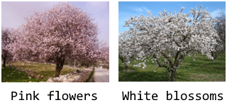 pink-flowers-white-blossoms